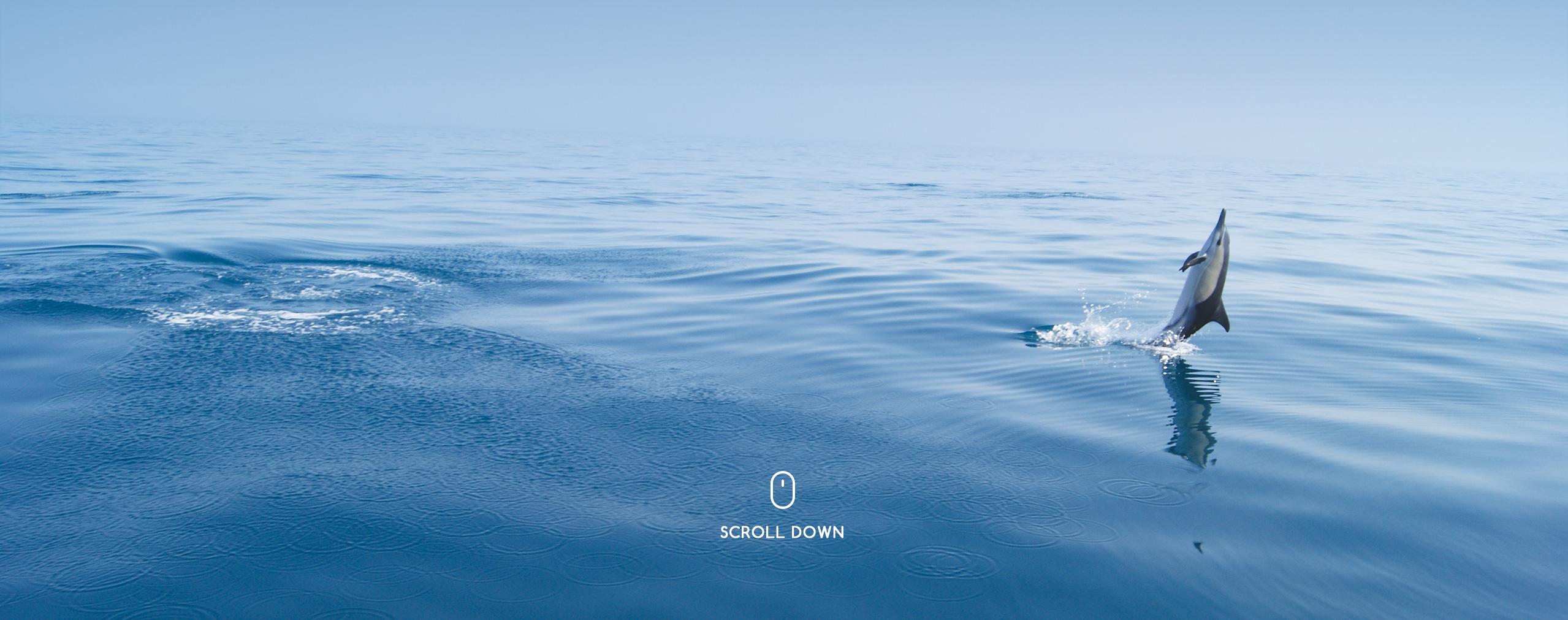 dolphins dolphin algarve portugal vilamoura