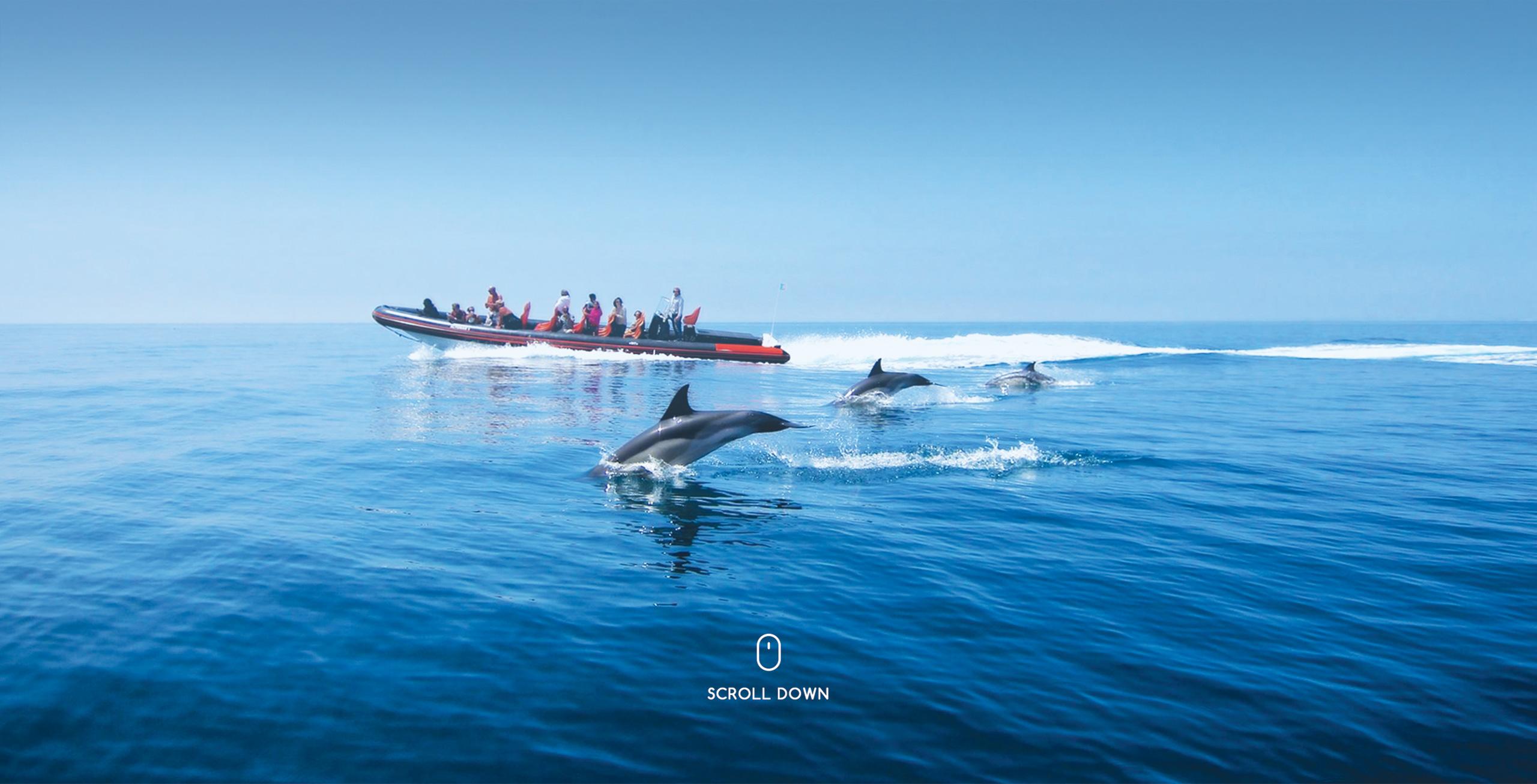 dolphin safari vilamoura algarve portugal