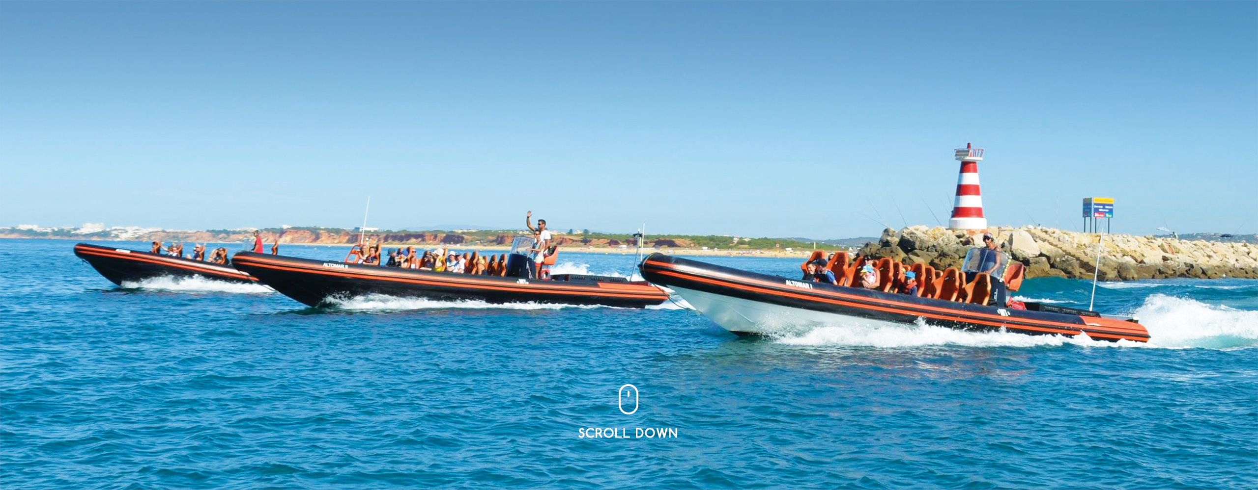 dolphin watching trips vilamoura algarve portugal