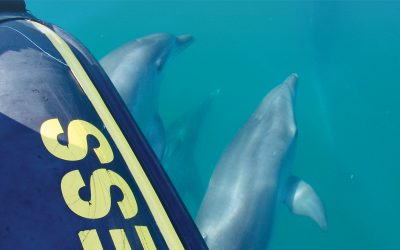 Bottlenose Dolphins Curiosities