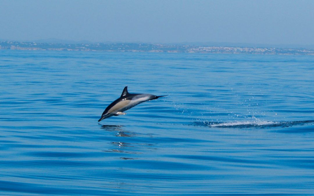 Dolphin Trip: Make Someone's Day
