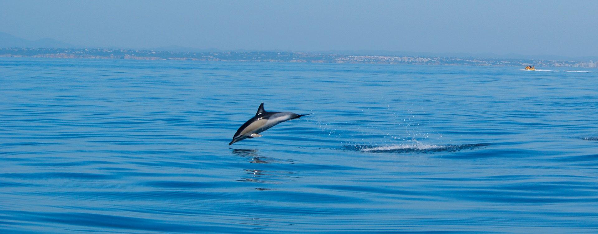 dolphins dolphin water algarve vilamoura